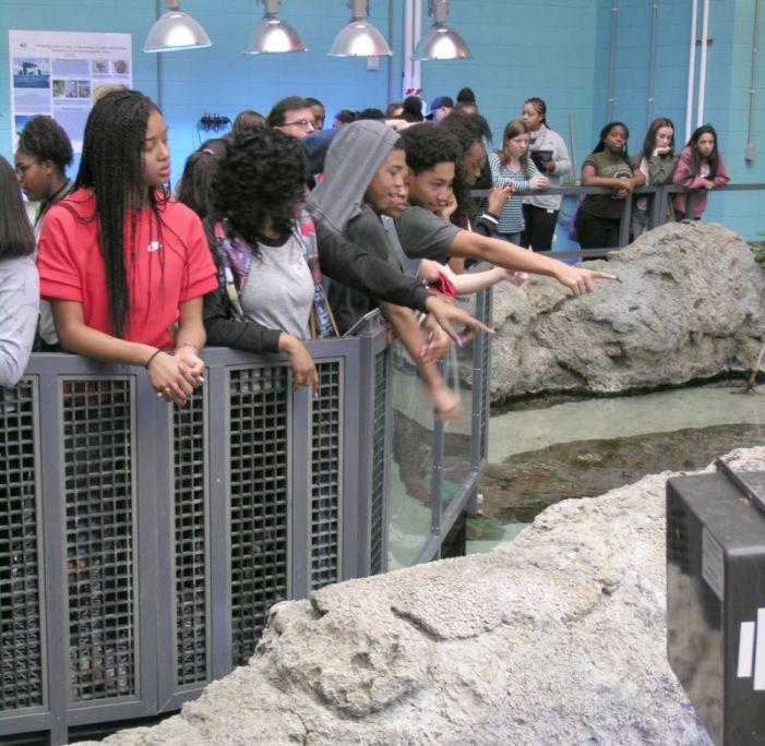 Stem Schools In Ga: Sandy Creek High School STEM Students Visit Aquarium