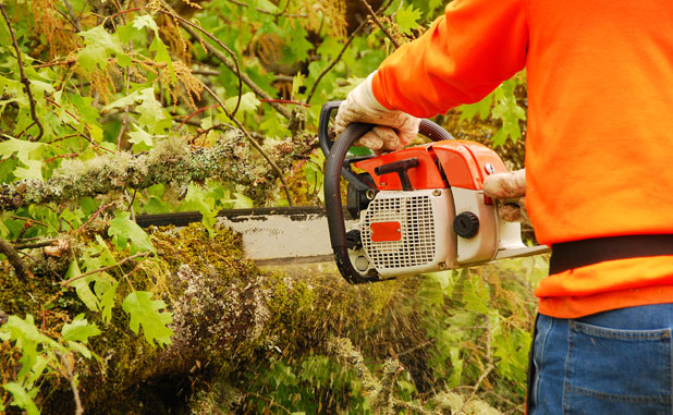PTC to fine green belt tree cutters $500?