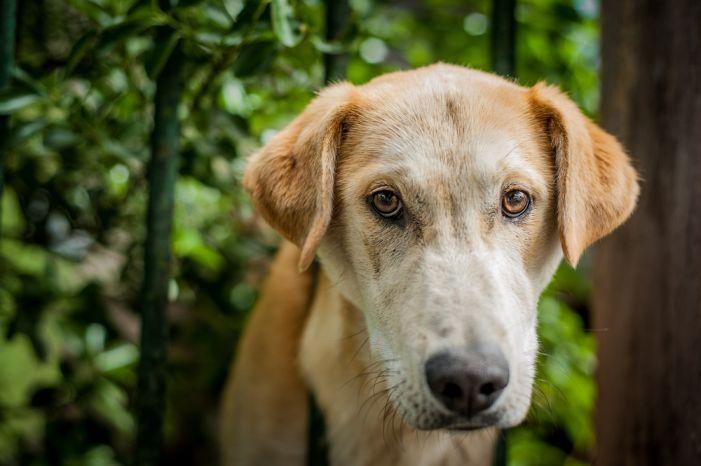 Councilman focuses on decreasing stray animal population