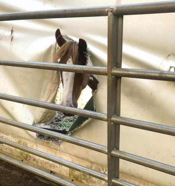 Horse helpers need help after Irma's damage
