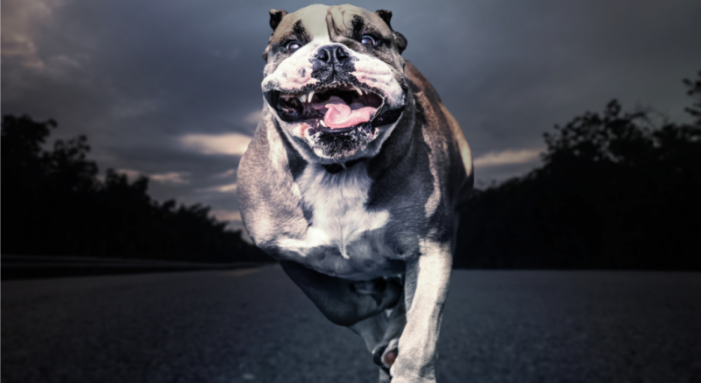 Bulldog attacks, injures Fayetteville woman, 70