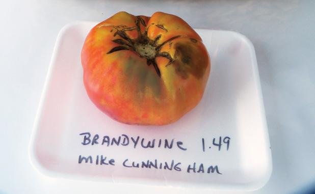 news_072515_Biggest-Tomato_color