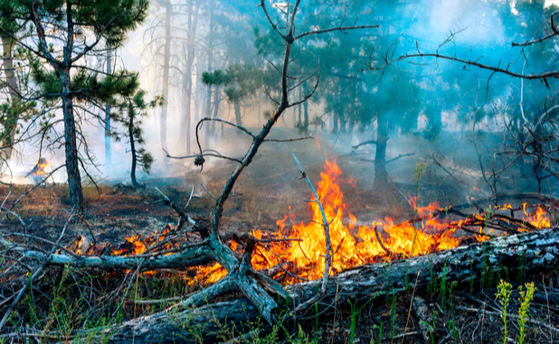 Forestry unit stays busy with 33 wildfires