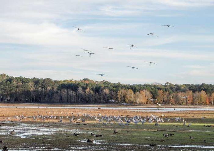 Fall season tourists visit Lake Peachtree