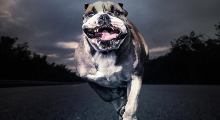 Bulldog attacks, injures Fayetteville woman, 70