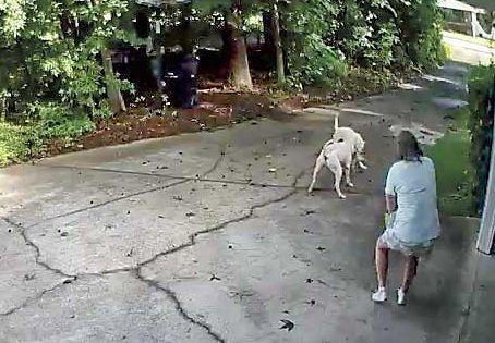 Fayette deputy shoots attacking dog